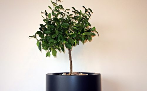 large cylindrical planter to outdoor and indoor use