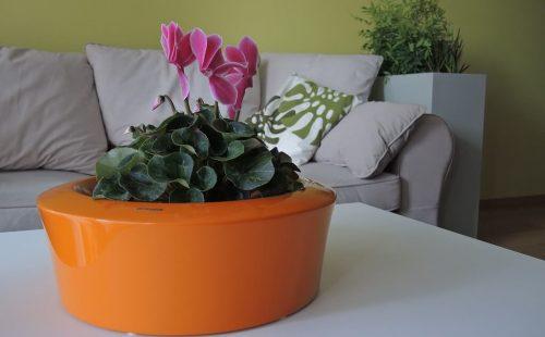 planter for desk