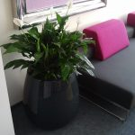 planters to hotels, offices, shopping center