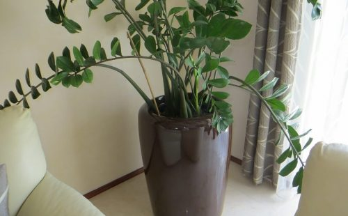 planter to offices