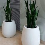 luxurious flower pots to offices, hotels