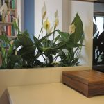 cuboid planter to office and garden