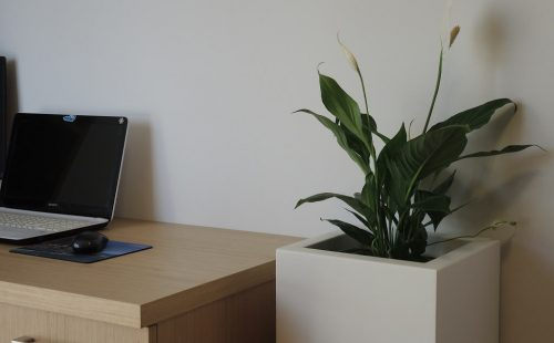 tall large flower pot to office