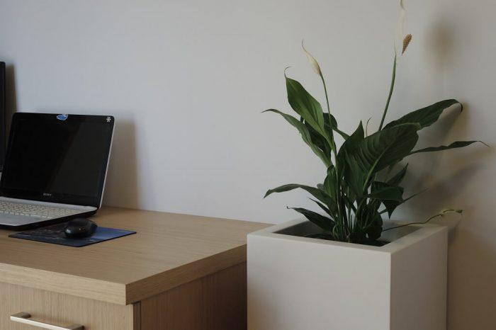 donica wysoka do biura, mieszkania, ogrodu